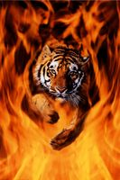 Tiger45b