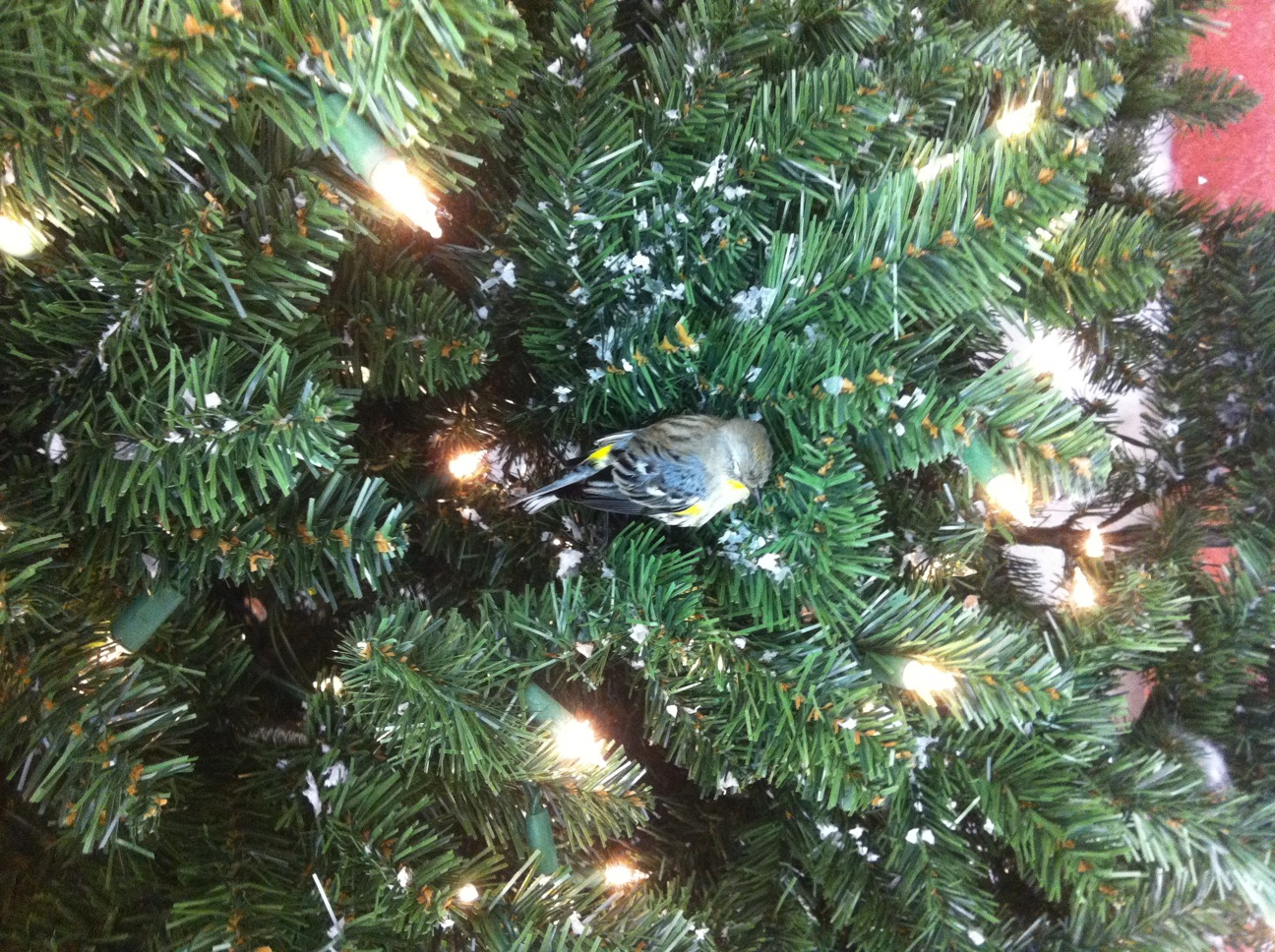 DeadBirdInChristmasTree