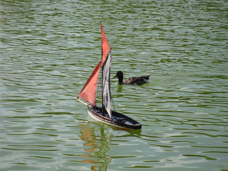 Ducky attacks the boat