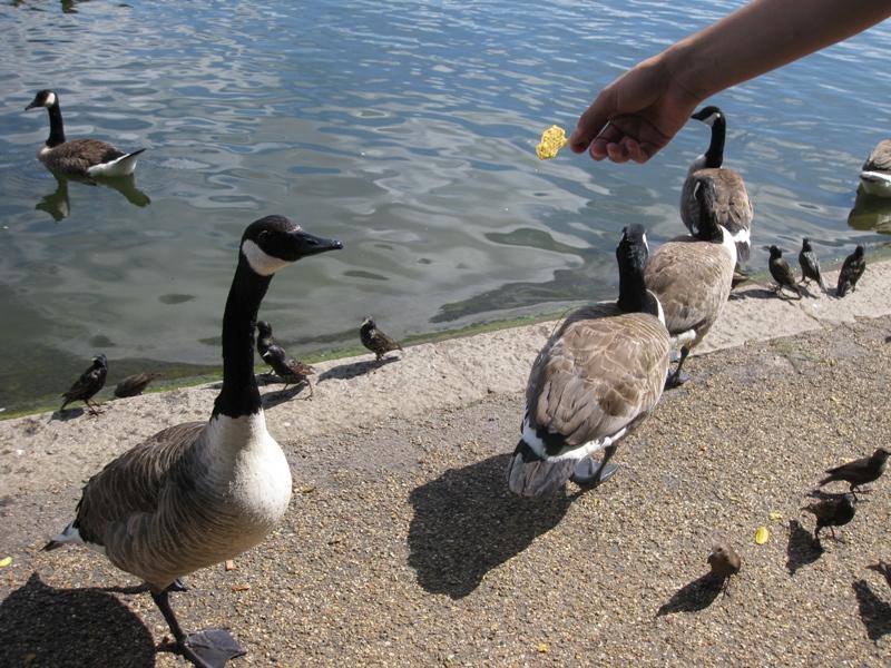 Fidding the ducky
