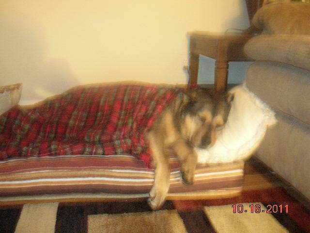 Dog Tired....zzzzzzz