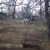 Pasture 2