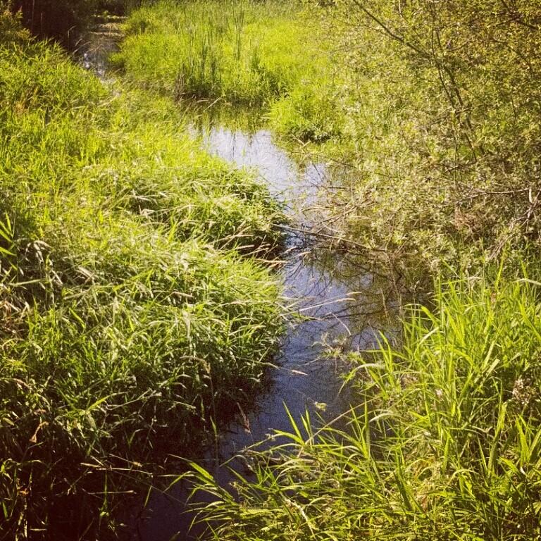 Juanita Bay wetlands (conservatory)