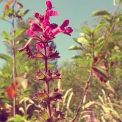 New plantation, Asian flowers planted at Juanita Bay