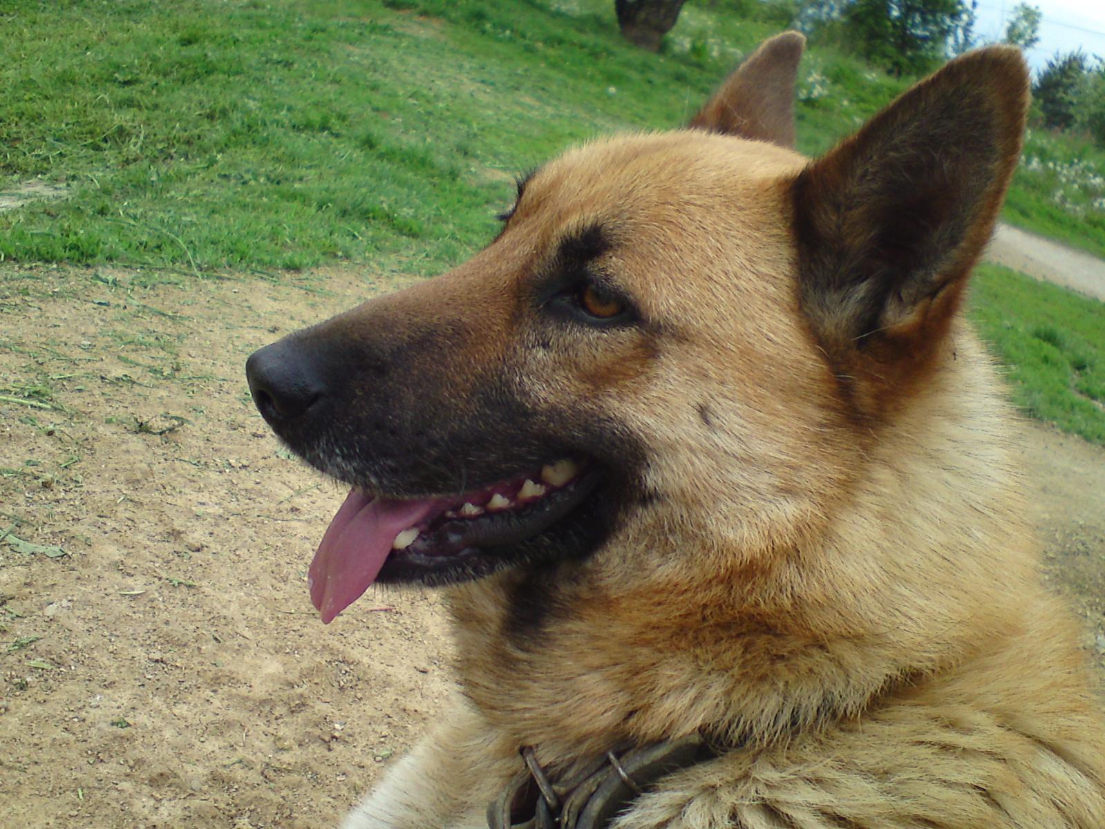 my friend Deny :) it is crazy Dog :D