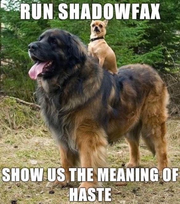 Run Shadowfax
