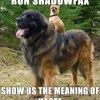 Run Shadowfax