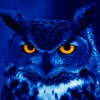 night Owl