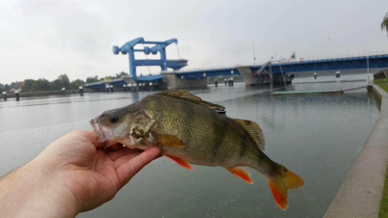 lets fish :)