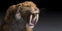 Saber-toothed_tiger_Smilodon_1.jpg