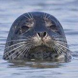 Diabolical Seal
