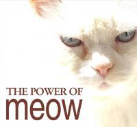 meow's Photo