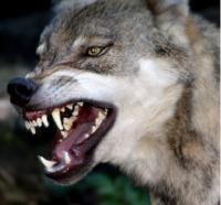 Wolf081's Photo